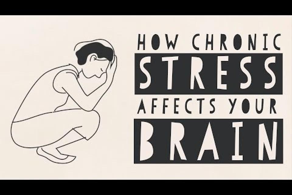 <div class='homepage-block-latest-news'>How Stress Affects Your Brain</div>